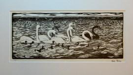 Svaner og troldænder, 57x26 cm