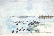 Troldænder ved bådebro, akvarel, 45 x 68 cm