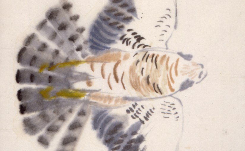 Spurvehøg