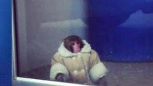 Ikea Monkey from this week.