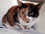 'Evie' 4 year old female. Evie is looking for a home as her owner couldn't keep her due to a change in work circumstances.