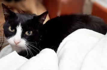 'Elba' 3 year old Male. Elba is looking for a new home due to his owners ill health.