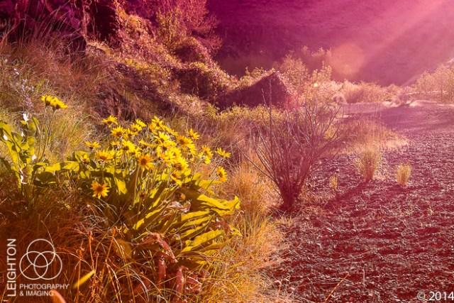 Sunset in the Sagebrush Desert
