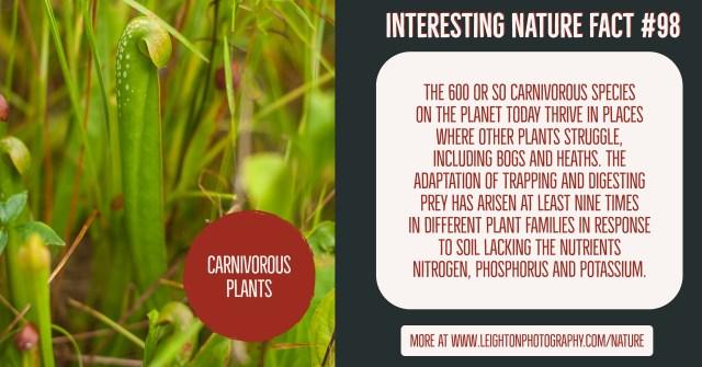 Carnivorous Plants