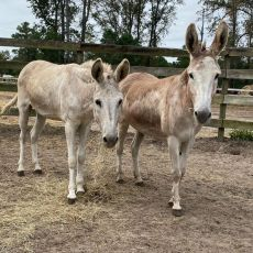 Louise and Thelma – Permanent Residents – In Need of Sponsors