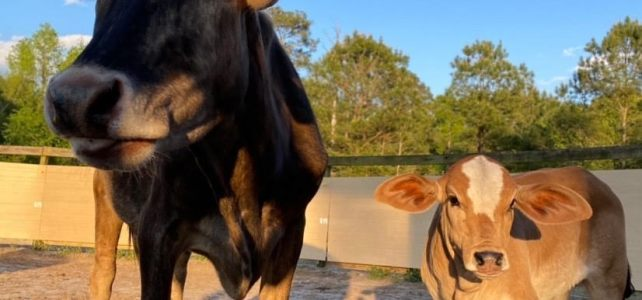 Bessie and Poppy – Adopted to Their Forever Homes!!