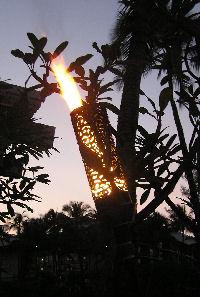 Bird of Paradise Malama Torch Lit