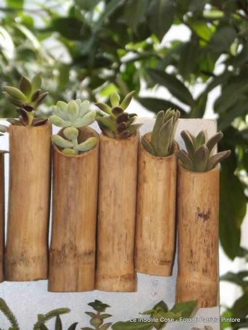Vere piante grasse in canne