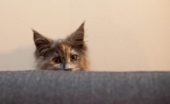 A new houseguest