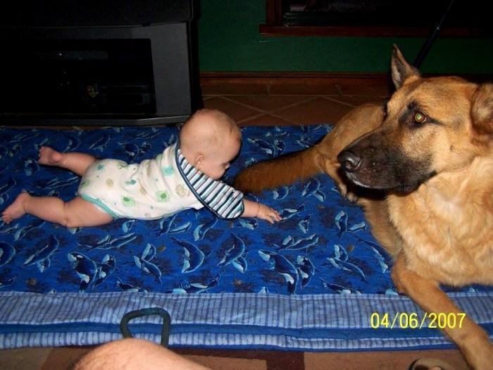 german-shepherd-with-baby-on-rug