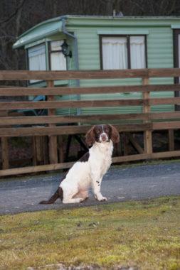 caravanning dog