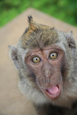Souvenir Des Singes Du Parc Safari Le Jardin Des Animaux