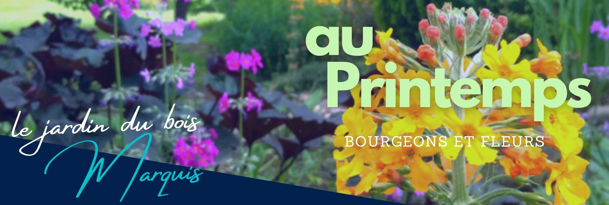 Au Printemps, les bourgeons et les fleurs sont nombreux, parfums et couleurs assurés.