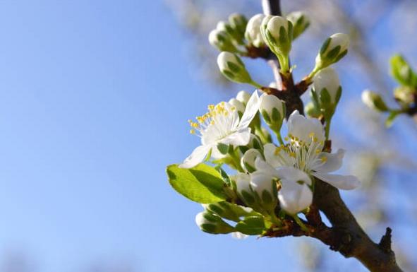 Risque allergique d'exposition aux pollens valable du 12/04/19 au 19/04/19.