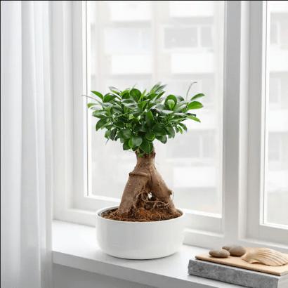 Ikea Les Plantes D Interieur A Shopper Pour Une Deco Vegetale
