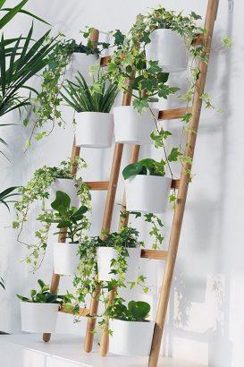 plantes d interieur 12 idees a copier