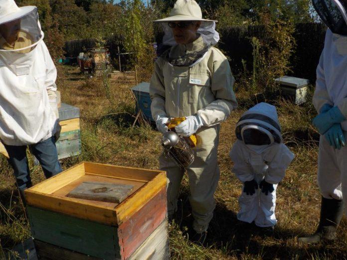 Tourn'abeille