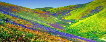 फूलों की घाटी-1