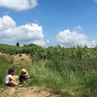 Kinderen tussen de wijnstokken