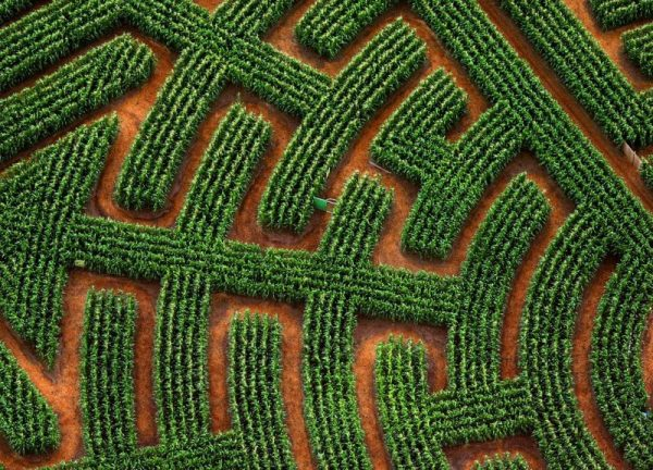 Labyrinthe végétal à Ribeauvillé