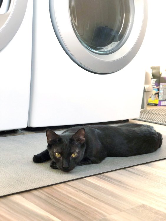 anti fatigue mat for laundry room