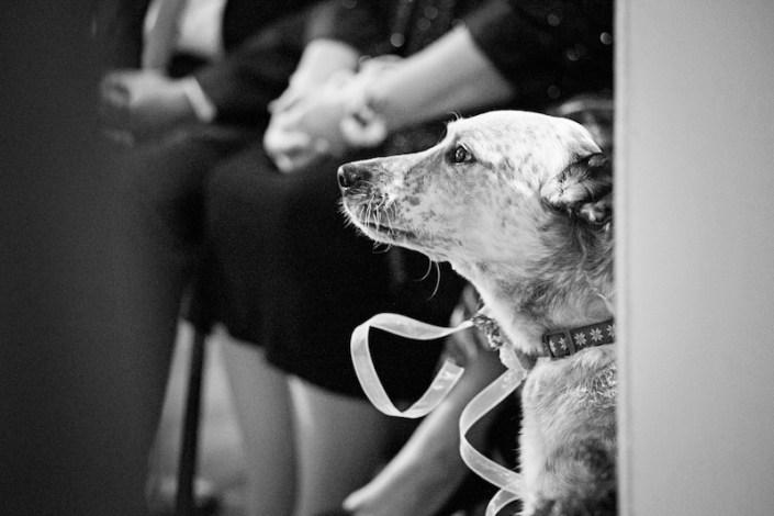 Leland Lodge | Fishtown Leland Hotel | Winter Wedding | Dog Ring Bearer