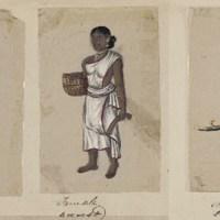 La doctrine traditionnelle des races et des castes