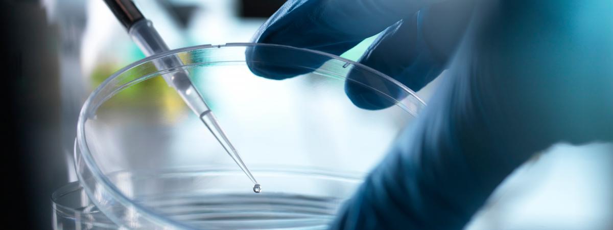 Un chercheur sur les cellules souches est accusé d'avoir falsifié ses résultats pendant des années