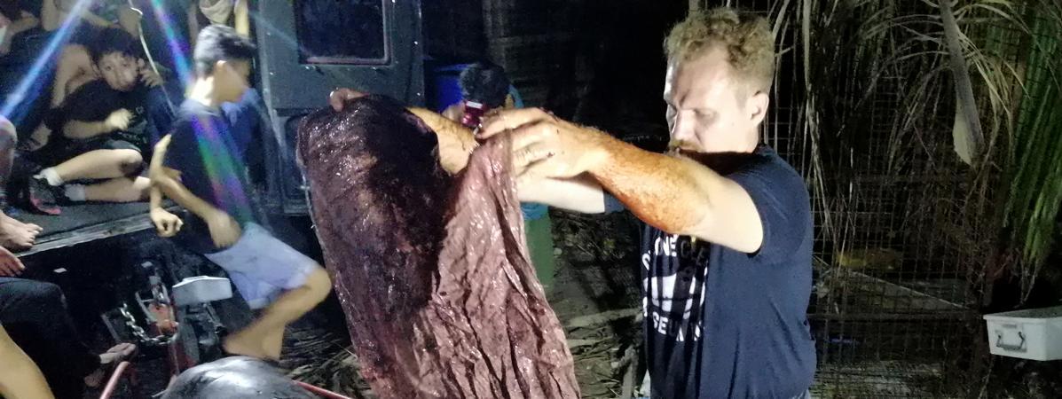 Une baleine meurt aux Philippines avec 40 kg de plastique dans l'estomac