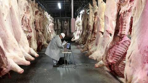 Bientôt du bœuf américain dans l'assiette des Européens