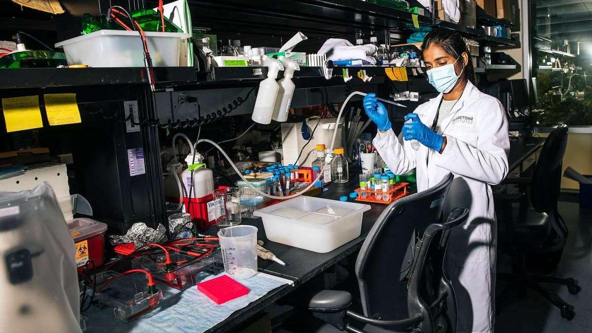 Des études montrent que les anticorps des coronavirus peuvent se dissiper rapidement, ce qui soulève des questions sur les vaccins