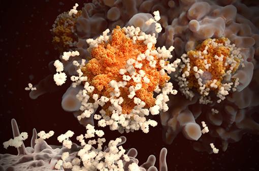 Vaccins Covid-19 : doit-on s'inquiéter du risque de maladie aggravée chez les vaccinées ?