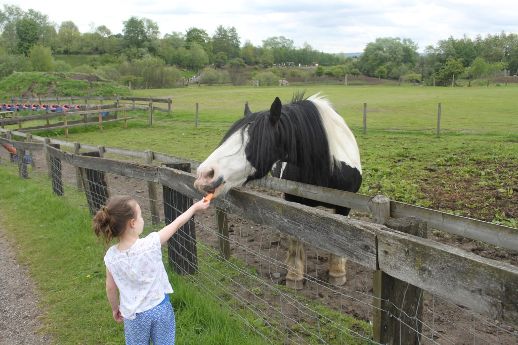 Family Fun at Lancaster Park and Animal Farm