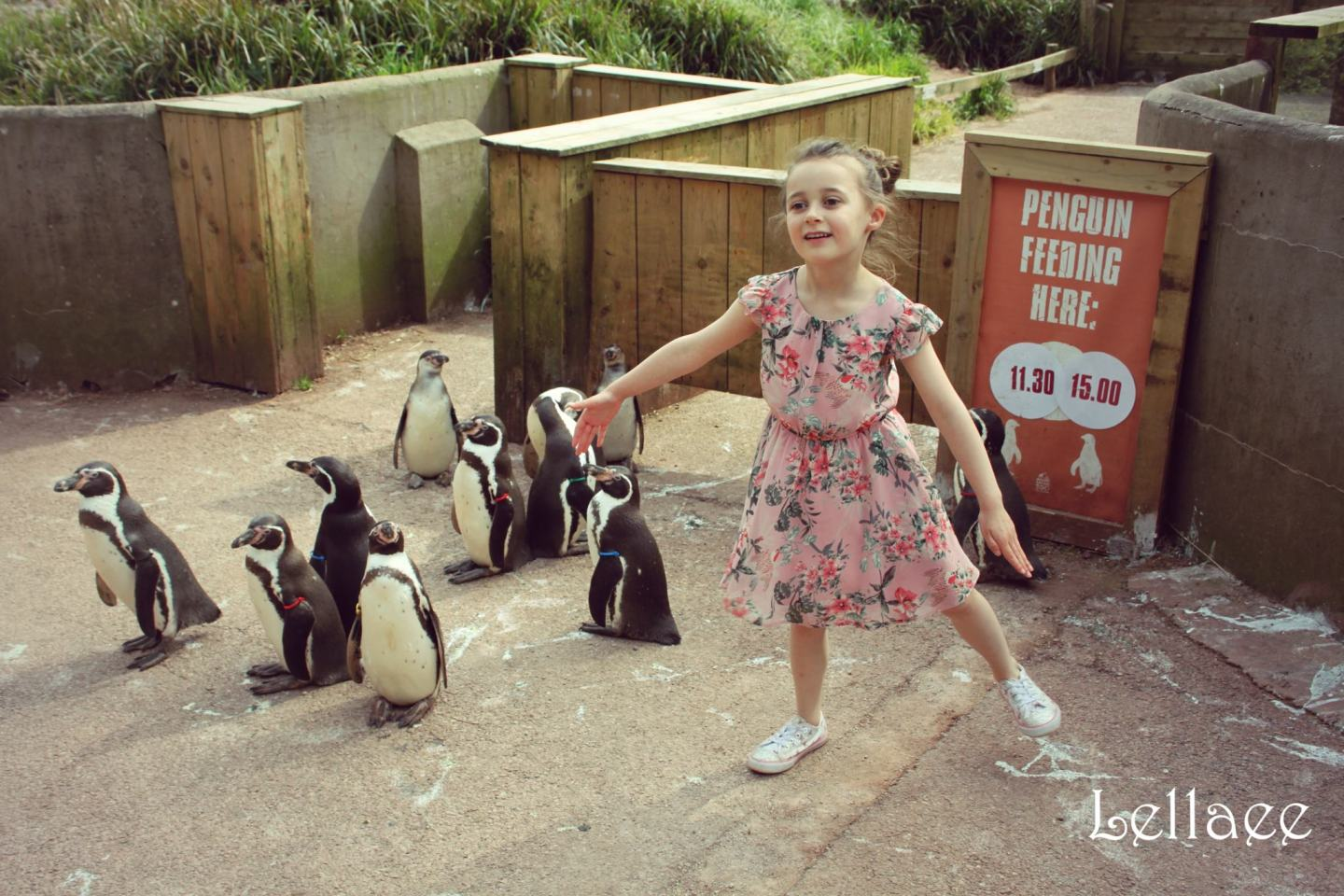 A Family Visit to South Lakes Safari Zoo