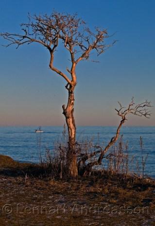 Vinterträd i Smygehuk