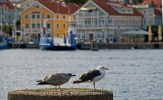 Trutar med Marstrand i bakgrunden