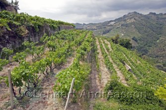 View of the wineyard
