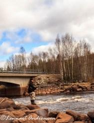 Sebbe fiskar av sträckan efter bron