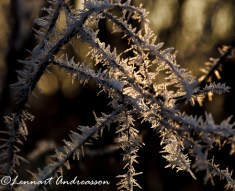 Vinterblomster