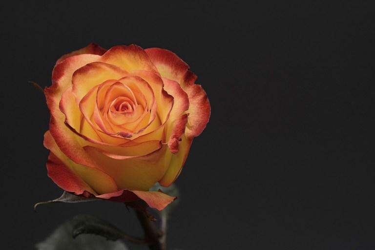 animation mariage à Toiry (01710) - theme mariage - theme boheme - theme champetre - magicien close up - light painting