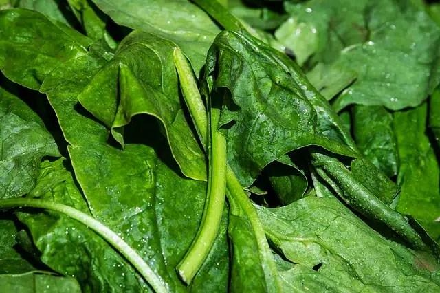 épinard frais