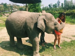 Elephant Retirement Park