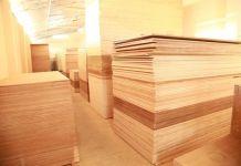 kayu lapis (2)