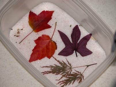 kerajinan daun kering