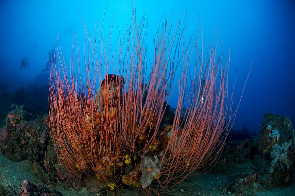 Underwater beauty