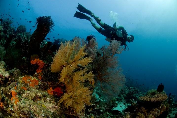 A great dive at Lemlunay