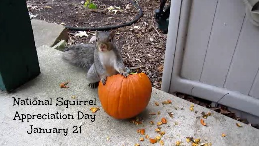 Squirrel Day