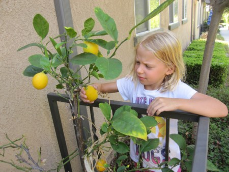 Emmy picking lemons