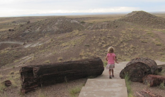petrified forest 1