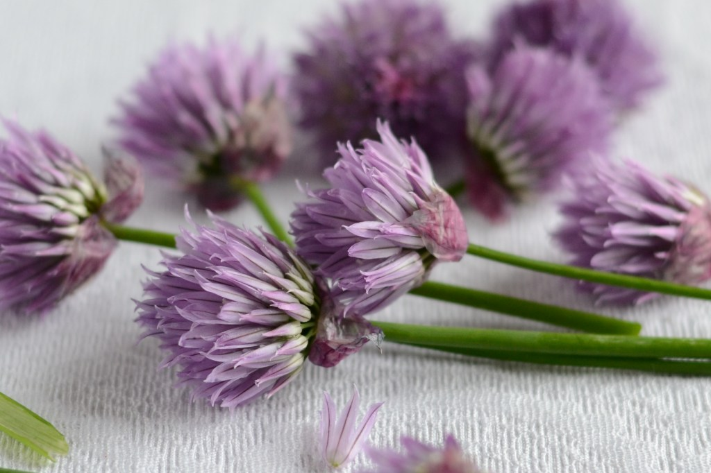 Chive Blossoms on Table
